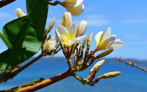 Une fleur à Madagascar