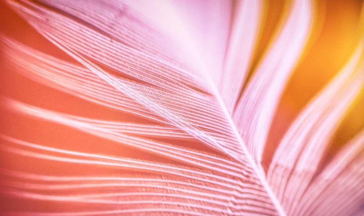 Image d'une plume