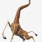 Melman:  la girafe